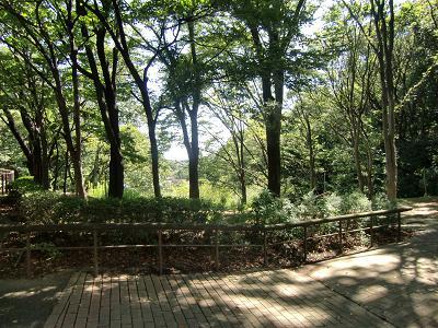 一本杉公園6