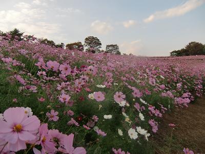 昭和記念公園8