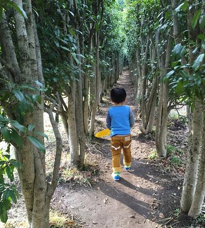木の中の道