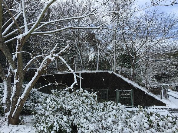 1/1の雪
