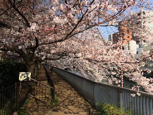 門前仲町の桜2