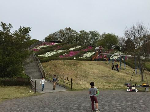 中井中央公園:芝桜とローラーすべり台