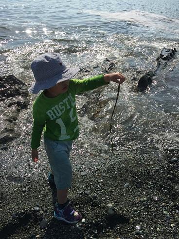 海藻をつまむ太郎