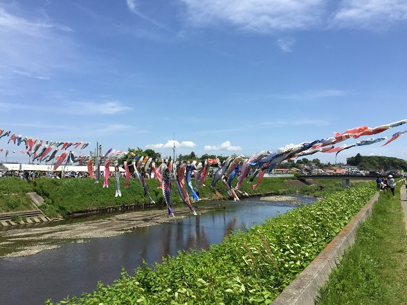 鈴川の鯉のぼり1