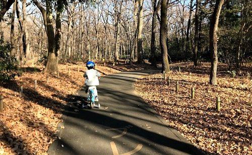 木立の中のサイクリングコース