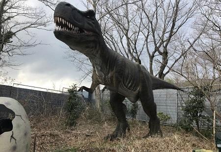 出ました! 恐竜の王者、ティラノサウルス