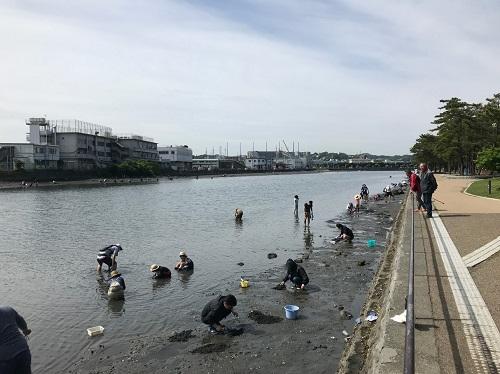 運河沿いの潮干狩り