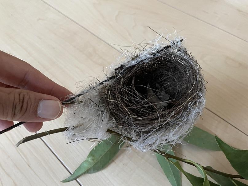何かの鳥の巣