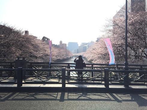 門前仲町の桜4